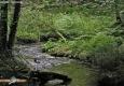 Sienne: Sources (Forêt de Saint Sever)