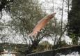 Saumon atlantique de la Sienne: mâle