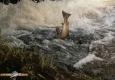 saumon-atlantique-octobre2013-18