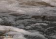 saumon-atlantique-octobre2013-29