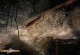 saumon-atlantique-octobre2013-34