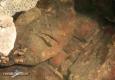 Truite fario: alevin